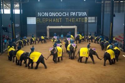 ช้างแสนรู้1