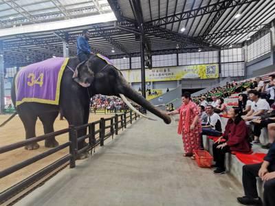 ช้างแสนรู้4