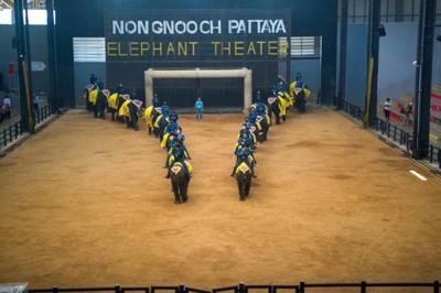 ช้างแสนรู้2
