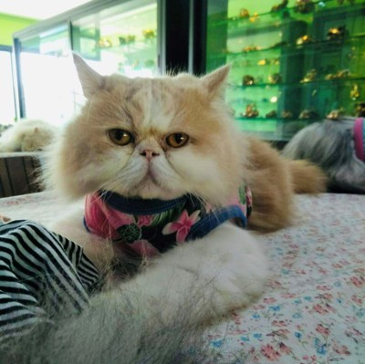 คาเฟ่แมว