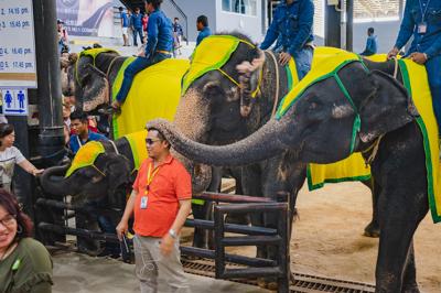 THE ELEPHANTS SHOW