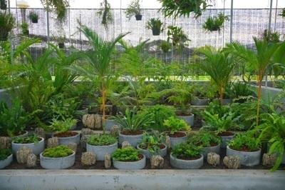 The botanical garden of Nongnooch2