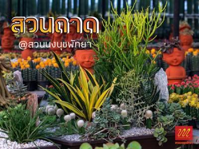 Tray garden