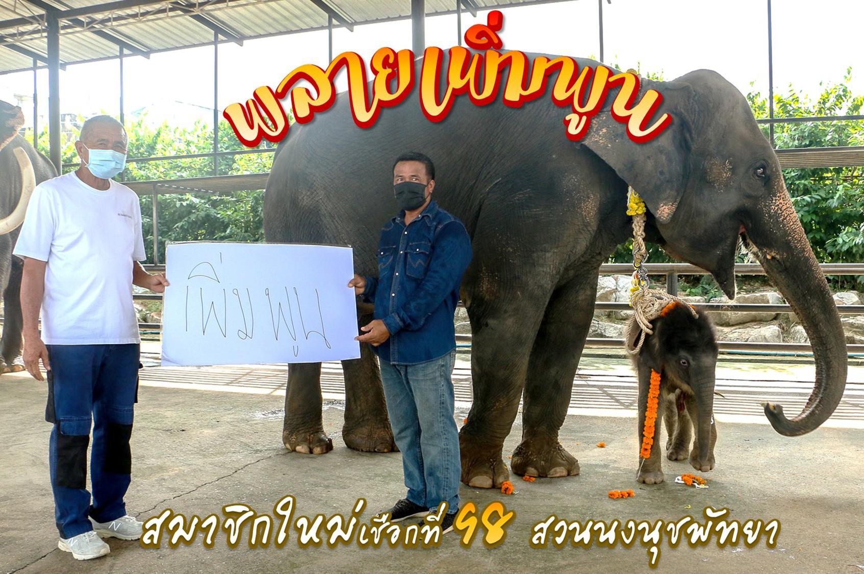 แม่ช้าง!!ปางช้างสวนนงนุชพัทยาฝ่าวิกฤติโควิด-19 เบ่งคลอดลูกเชือกที่ 98