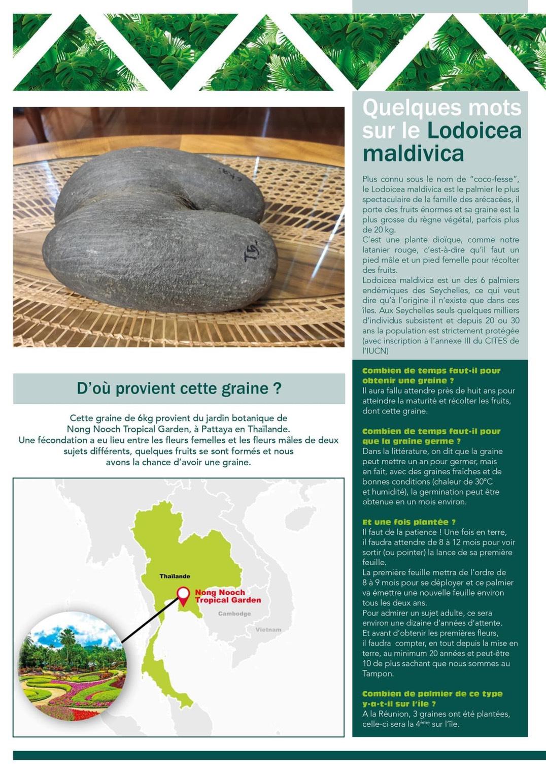 สวนนงนุชพัทยา มอบเมล็ดมะพร้าวทะเล ไปปลูกที่หมู่เกาะรียูเนียน ประเทศฝรั่งเศส